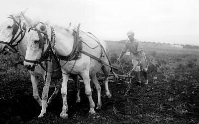 A member of Kibbutz Ein Harod plowing a field, 1934 (Kluger Zoltan, GPO)