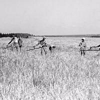 Kibbutz members harvesting grain at Ein Harod, 1938 (Kluger Zoltan/GPO)