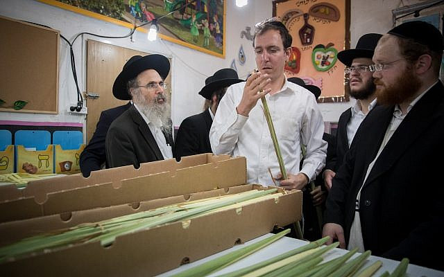 An ultra orthodox Jewish man examines a palm frond, known as lulav, in the ultra-Orthodox Jewish neighborhood of Meah Shearim in Jerusalem, October 1, 2017. (Yonatan Sindel/Flash90)