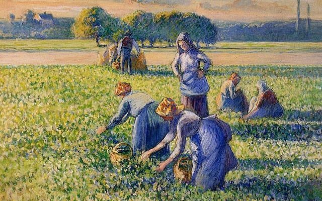 'La cueillette des pois' ('Picking Peas') by Camille Pissarro, painted in 1887. (Public domain, Wikimedia Commons)