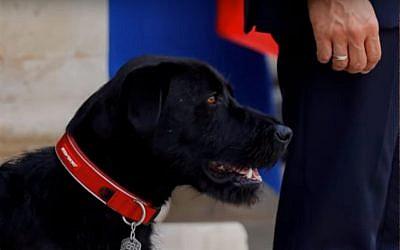 Nemo, French President Emmanuel Macron's  black labrador. (Youtube screenshot)
