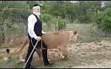 ZAKA head Yehuda Meshi-Zahav walks with lions in South Africa, November 15, 2017. (Screen capture: Twitter)