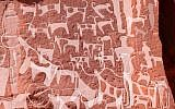 Detail photograph of a panel in Saudi Arabia's Shuwaymis west showing a complex stratigraphic sequence with dog engravings and human figures superimposed with multiple cattle. To aid visibility only clearly identifiable engravings of dogs, cattle and human figures were traced. (Journal of Anthropological Archaeology)