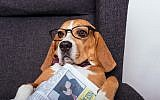 A dog with glasses and a newspaper. (LightFieldStudios via iStock/Getty Images)