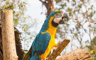 Illustrative image of a macaw parrot sitting on a branch. (PARNTAWAN/iStock via Getty images)