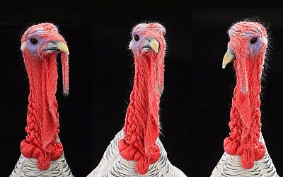 Illustrative photo of turkeys (bazilfoto; iStock by Getty Images)