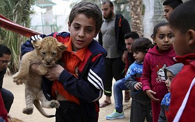 A Palestinian youth holds a two-month-old lion cub while children watch at the zoo in Rafah, Gaza Strip, Friday, December 22, 2017. (AP Photo/Adel Hana)