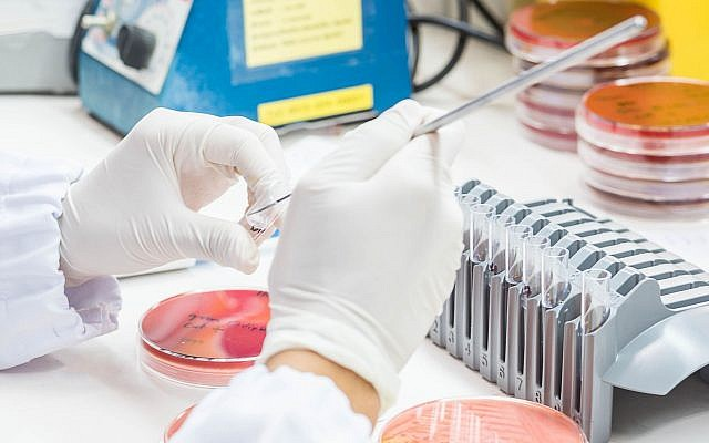 Illustrative close up of medical technician working on a bacterial culture (Credit: 10174593_258, iStock by Getty Images)