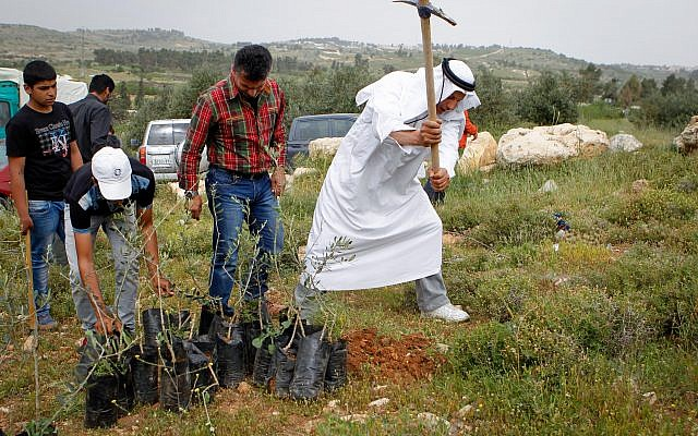 Illustrative: Palestinian officials along with Israeli and International peace activists plant trees near Beit Al Baraka compound as part of a protest against the land being taken over by Israeli settlers on April 9, 2016. (Wisam Hashlamoun/Flash90)