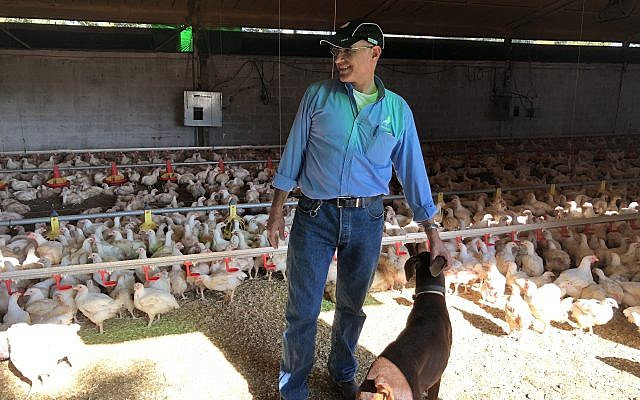 Arik Melamed, the proprietor of Melamed Farms, one of the few organic chicken farms in Israel (Jessica Steinberg/Times of Israel)