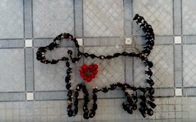 Israeli animal activists join together on December 10, 2017, to remember International Animal Rights Day (Courtesy Drone Imagebank)