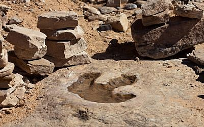 Dinosaur footprint in Australia. (Wikimedia Commons)