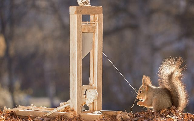 A squirrel with a guillotine. (iStock by Getty Images/Hardeko)