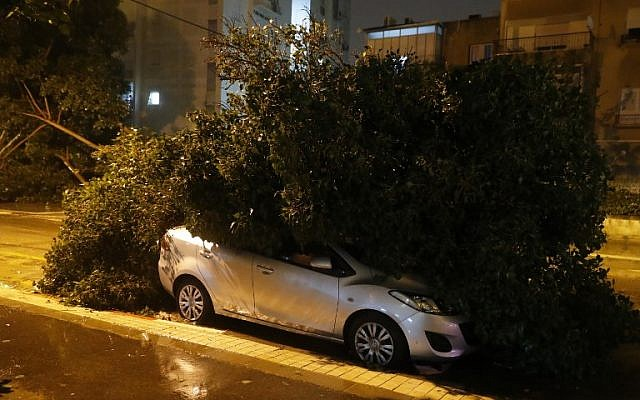 A car is seen under a tree that fell in heavy winds in Netanya, north of Tel Aviv, as a storm hit the country on January 18, 2018.  (AFP PHOTO / JACK GUEZ)