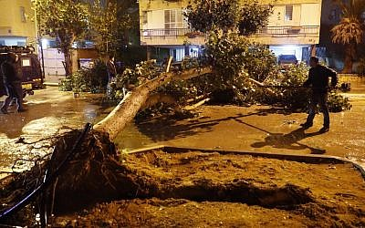 Emergency crews cut a tree blocking the road in the Israeli town of Netanya, north of Tel Aviv, after it fell due to heavy winds as a storm hit the country on January 18, 2018. (AFP Photo/Jack Guez)