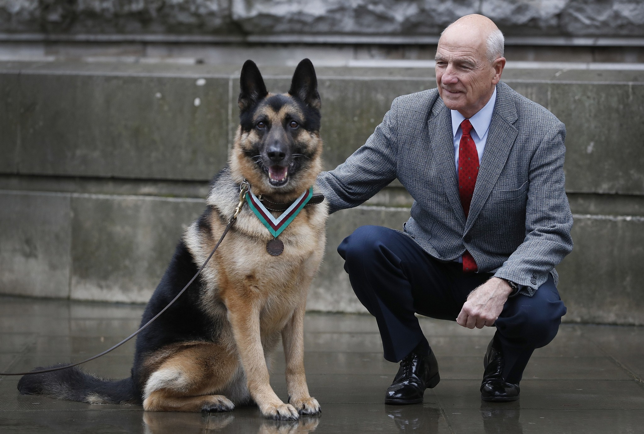 Us Army Wwii Hero Dog Receives Posthumous Medal The Times Of Israel