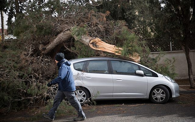 A man rides a bicycle by a tree which has fallen on a car in Jerusalem, due to heavy winds, as a heavy storm hits Israel. January 05, 2018.  (Ynatan Sindel/Flash90)