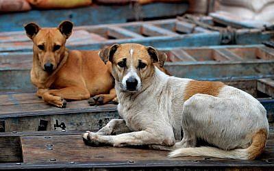 Stray dogs. (JDMaddox/iStockphoto, Getty Images)