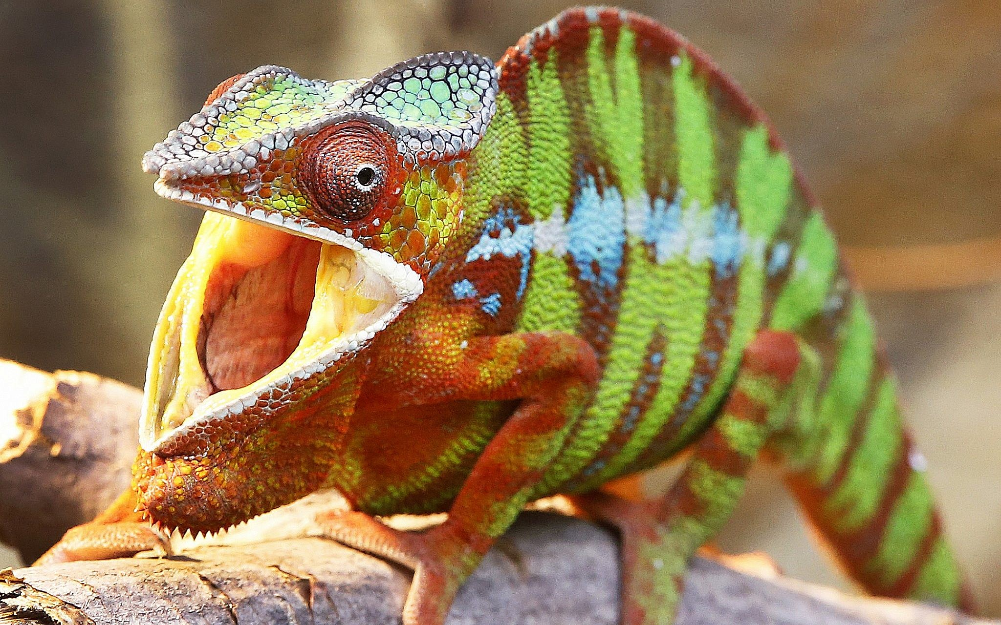 Iran accuses West of using lizards for nuclear spying | The Times of