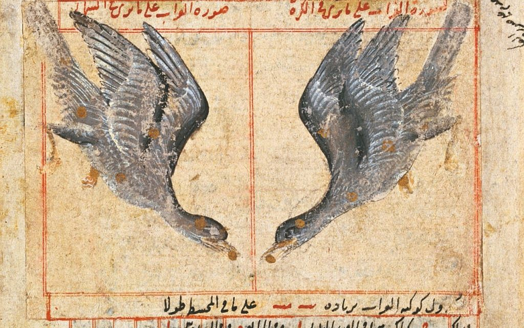 Inset of 'The Constellation of Corvus the Raven,' Iran, 16th century (Brooklyn Museum)