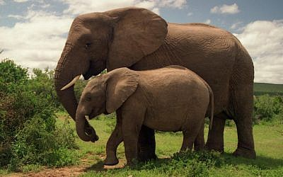Illustrative image of elephants in Addo Elephant National Park (CC BY Brian Snelson, Flickr)