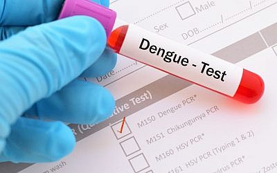 Dengue fever is a disease caused by a virus transmitted from mosquitos most commonly found in South East Asia and South America (jarun011; iStock by Getty Images)