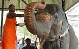 A Sri Lankan Buddhist monk blesses an elephant at a zoo in Dehiwala on the outskirts of Colombo on April 16, 2018, as part of traditional New Year rituals (AFP PHOTO / LAKRUWAN WANNIARACHCHI)