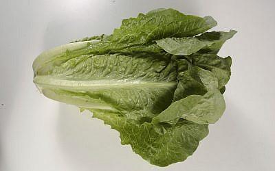 Romaine lettuce (Steve Campbell/Houston Chronicle via AP)