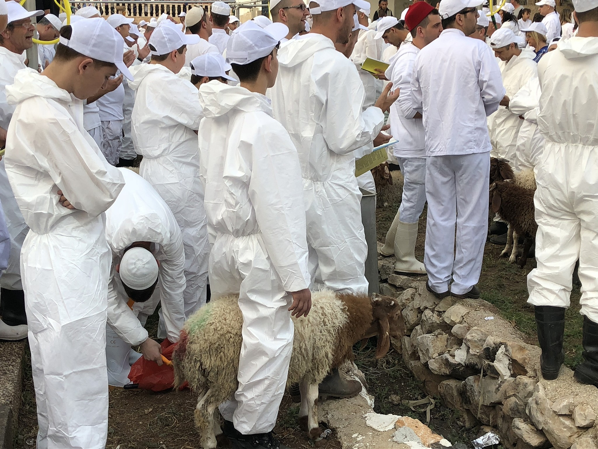 Samaritans take part in the traditional Passover sacrifice ceremony, where sheep and goats are slaughtered, at Mount Gerizim near the northern West Bank city of Nablus on April 29, 2018. (Jacob Magid/Times of Israel)
