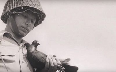 Israel used carrier pigeons to ferry messages from the battlefield to Israeli military headquarters during the 1948 war. (Courtesy)
