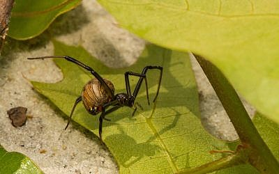 Illustrative image of a brown spider (JasonOndreicka; iStock by Getty Images)