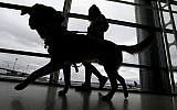 Illustrative: A trainer walks with a service dog through the Terminal C at Newark Liberty International Airport as part of an April 2017 exercise put on by the Seeing Eye puppy program. (AP Photo/Julio Cortez)