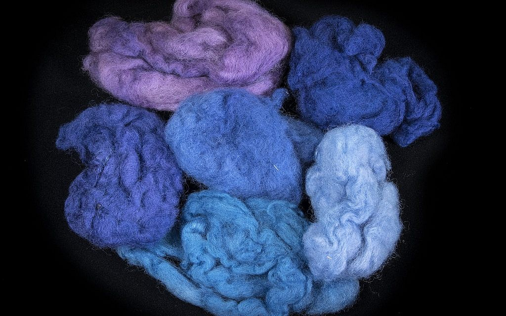 Woolen fleeces dyed in different colors with dye extracted from Murex trunculus snails (courtesy of Ptil Tekhelet/Moshe Caine)