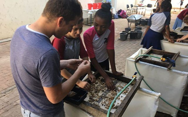 Temple Mount soil being sifted in the city of Petach Tikva by Yeshurun High school students (Inbal Dasberg/Temple Mount Sifting Project)
