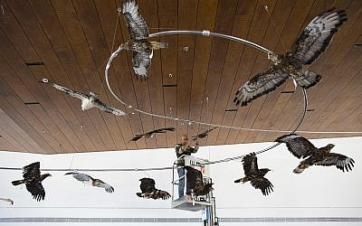 Exhibition technician Dima Gurewitz places stuffed birds to be displayed at the Steinhardt Museum of Natural History in Tel Aviv, Israel, June 21, 2017. (Oded Balilty/AP)