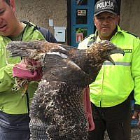 In this photo taken in May 2018 in Ecuador and provided by Interpol on Wednesday, June 20, 2018, Ecuadorian police officers inspect a bird of prey. (Interpol via AP)