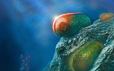 Illustration: Cyanobacteria. (Itay Goldshmid)