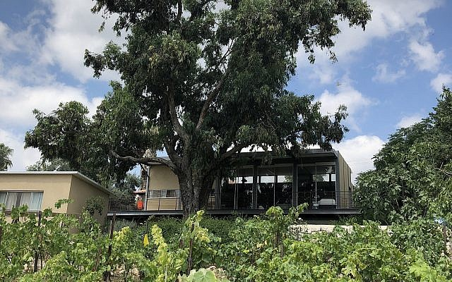 The back of Hedai Offaim's Moshav Tzafririm house, where he grows dozens of different fruits and herbs, and grapes (Jessica Steinberg/Times of Israel)