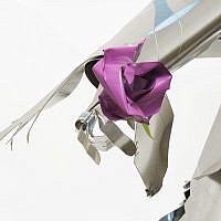 King Solomon's pink rose (Courtesy Ricky Rachman)