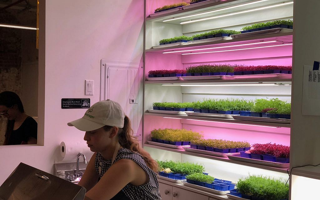 Vertically grown microgreens harvested from directly behind the counter at Harvest2Order microgreen salad bar in New York City. (Courtesy)