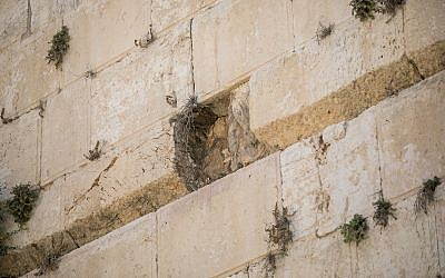 View of the site where a large chunk of stone dislodged from the Western Wall in Jerusalem at the mixed-gender prayer section on July 23, 2016. (Yonatan Sindel/Flash90)
