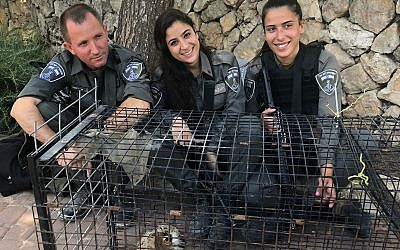 Border Police officers pose with a Eurasian eagle-owl that they rescued near Jerusalem, July 7, 2018 (Israel Police)