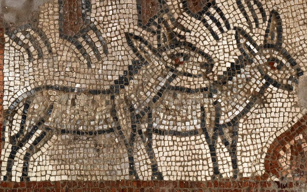 Pair of donkeys in Noah's Ark scene at the Huqoq excavation. (Jim Haberman via UNC-Chapel Hill)