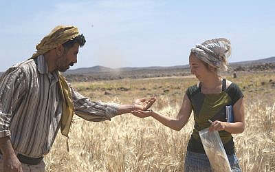 Dr. Amaia Arranz-Otaegui, right, and Ali Shakaiteer sampling cereals in the Shubayqa area in northeastern Jordan where ancient bread was found. (Joe Roe)
