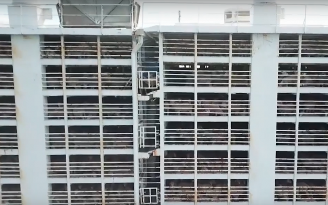 Sheep being shipped for fattening and slaughter in multi-story vessels.  (YouTube screenshot)