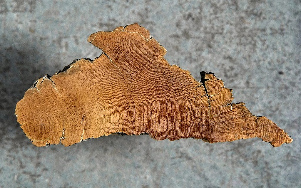 Ancient              wood sample used by assistant professor of dendrochronology              Dr. Charlotte Pearson in her lab at the University of              Arizona. (Robert D. Demers)