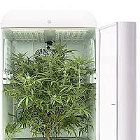 An illustration of Seedo's technology for the automated growing of cannabis. (Seedo)