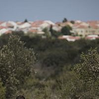 Illustrative: Woods near Zichron Yaakov (Hadas Parush/Flash90)