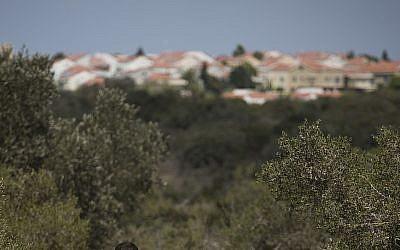 Illustrative: Woods near Zichron Yaakov (Hadas Parush/Flash90)