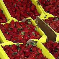 FILE - This Aug. 12, 2005 file photo shows organically grown strawberries for sale at a roadside stand in Watsonville, California (AP Photo/Rita Beamish, file)